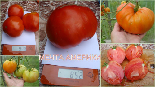 MECTA-AMERIKI42ed56995c12cb85.jpg