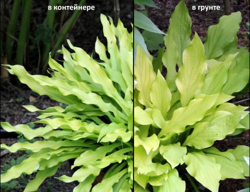 compare_seedlb642c09cd6425e59.jpg