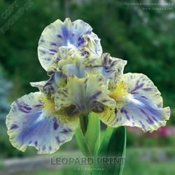 LEOPARD-PRINT616e7358cfb06792